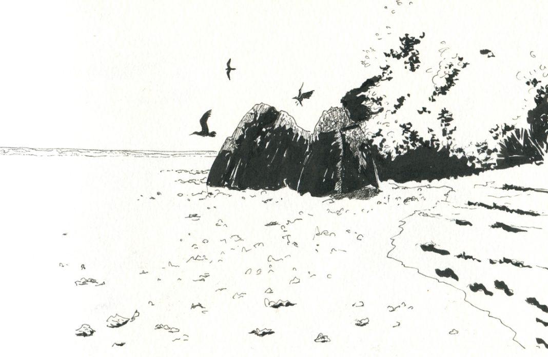 Carnet de voyage Wallis oiseaux©Martin Bohn