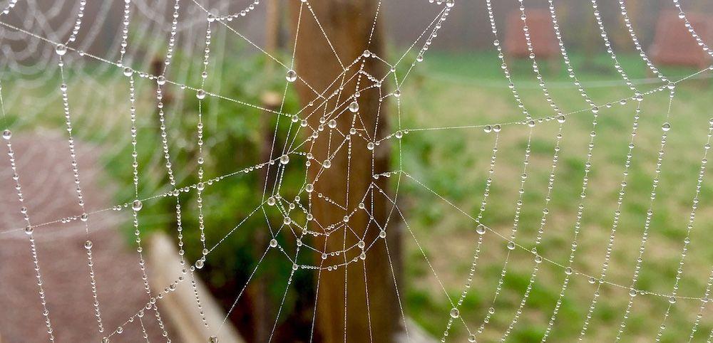 Toile d'araignée 1000x482cMartin Bohn